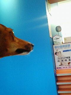 狂犬病予防接種。