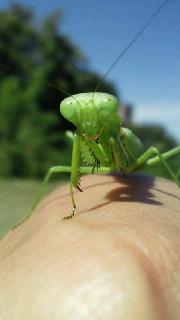 昆虫採集。