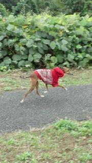 冬支度で固まる犬。