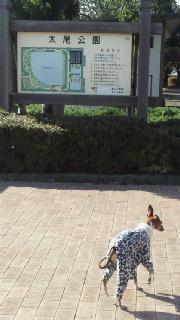 探検してたら公園見ーつけた♪